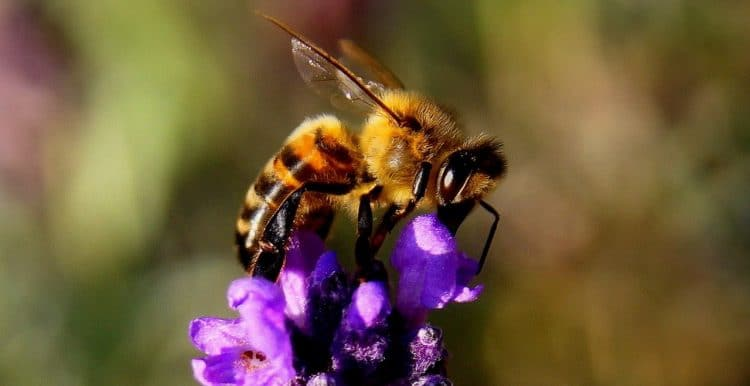 what weed killer is safe for bees