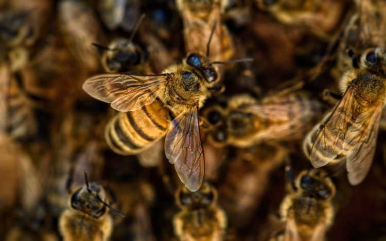 bee safe weedkiller