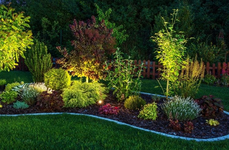 How to light trees in your yard
