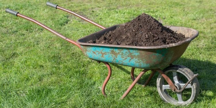 Is Compost Good For Grass?