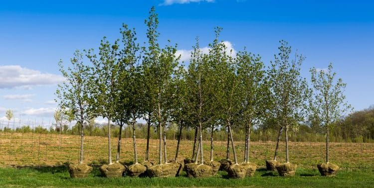 Is Compost Good For Trees?