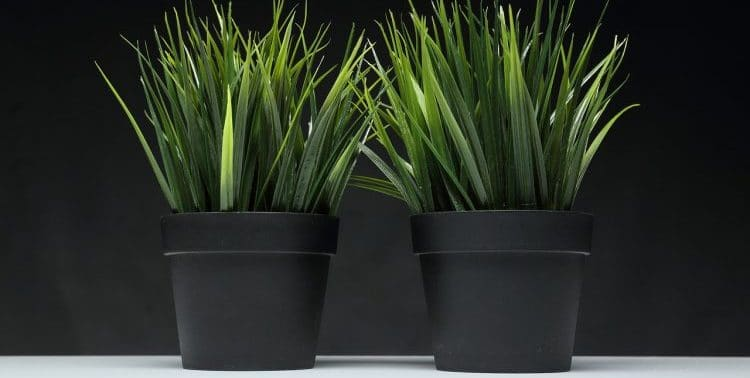 Why Are Plant Pots Black?