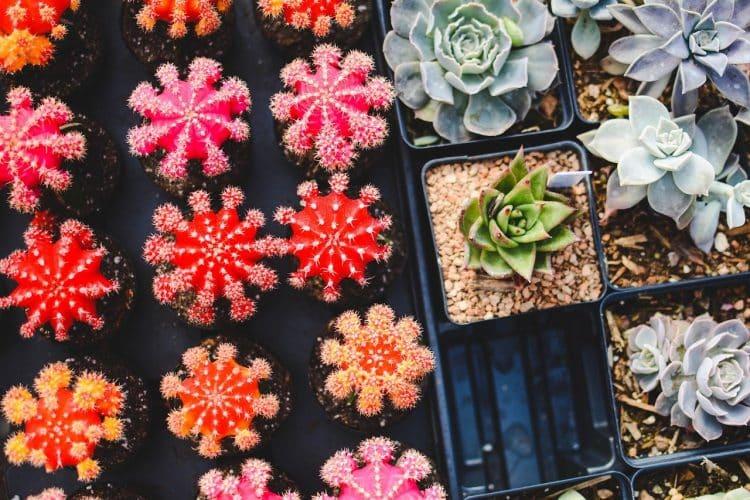 Black planter trays
