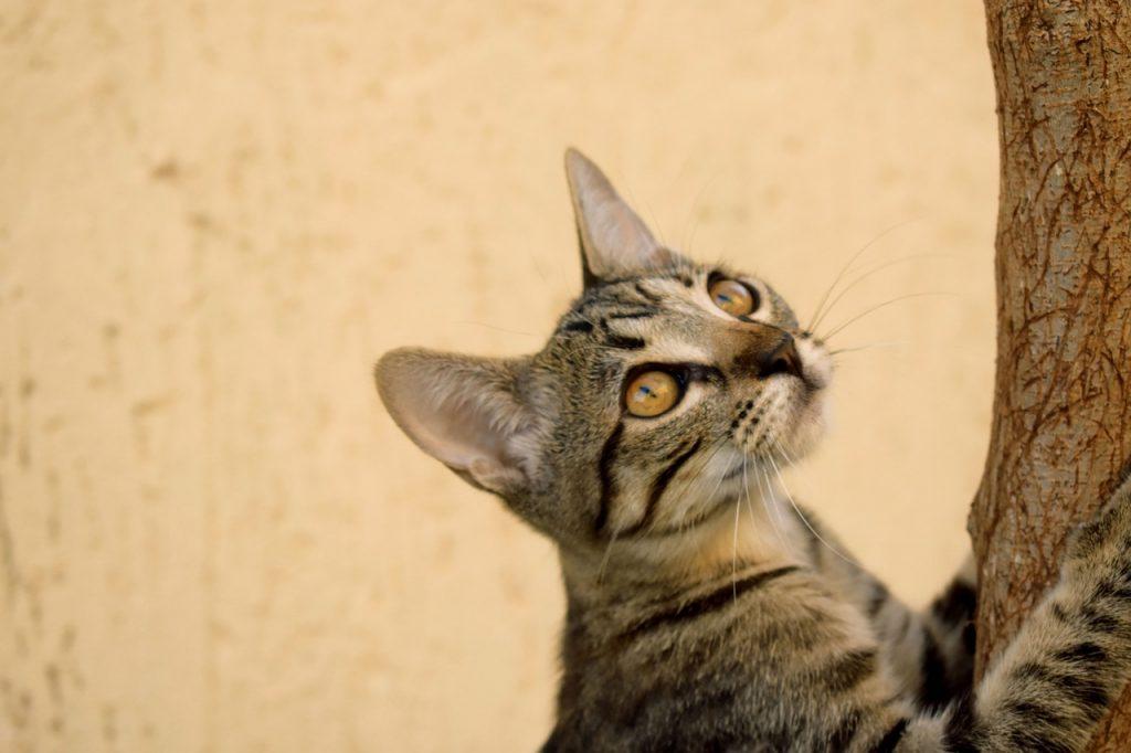 Are Pergolas Dangerous To Cats?