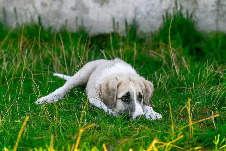 Compost can be bad for dogs