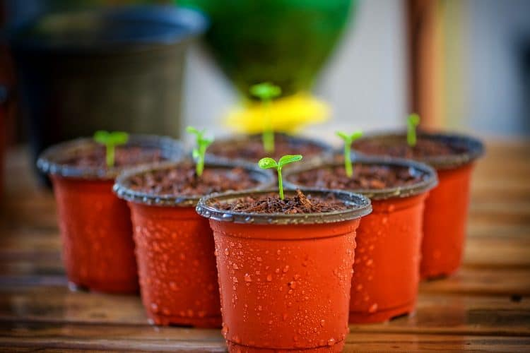 Are Plant Pots Recyclable?