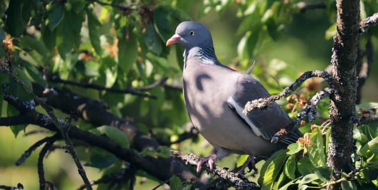Do Garden Statues Keep Birds Away?