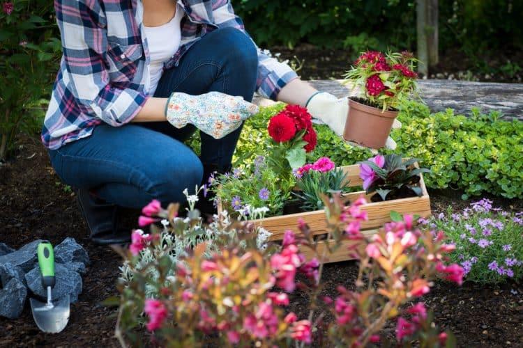 Is gardening exercise?