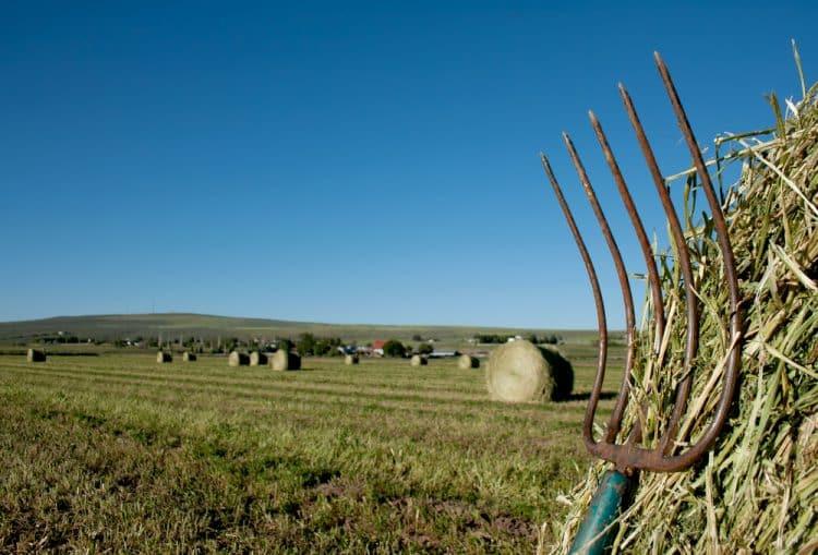 Pitchfork in a field