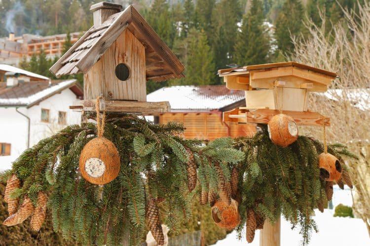 Coconut oil bird feeders