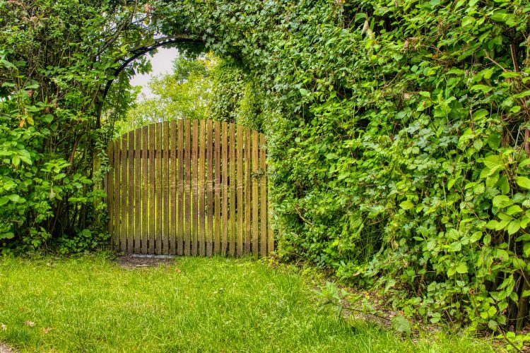What is The Best Wood For a Garden Gate?