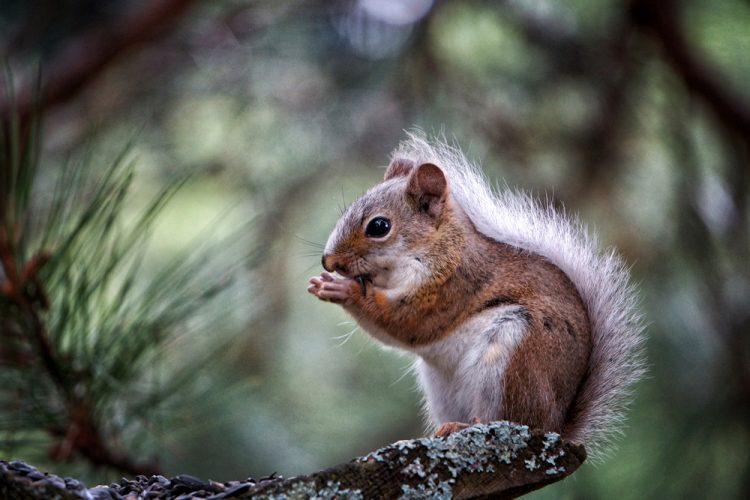 Are Squirrels Pests?