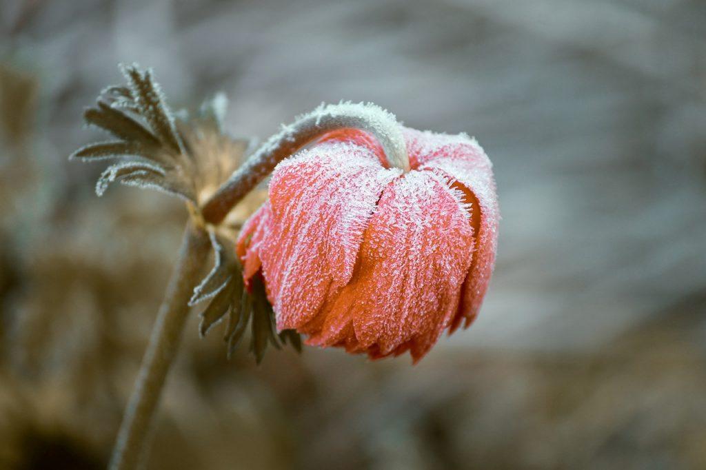 What plants survive frost?