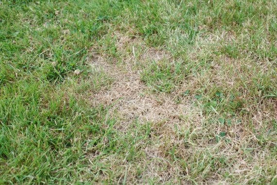 Do Lawn Seed Blankets Work?
