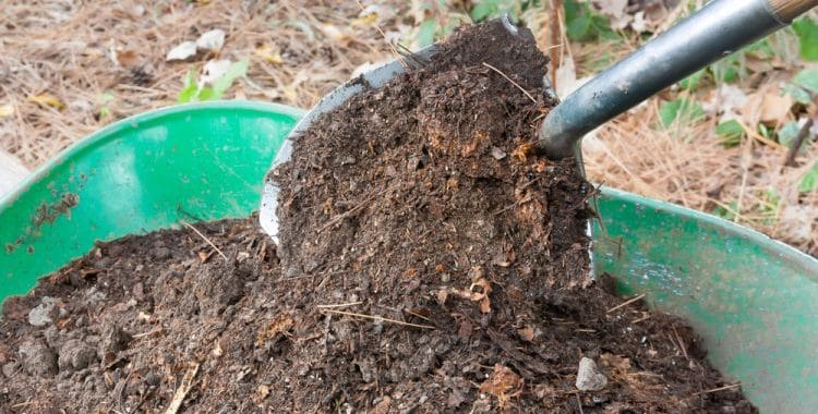 Is Compost Fertilizer?
