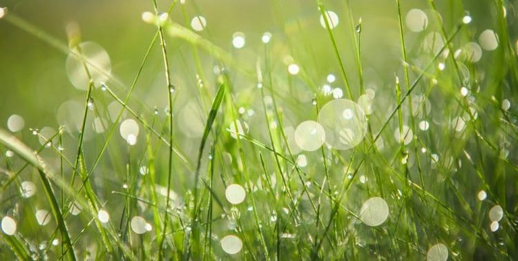 How Do Lawn Bubbles Form?