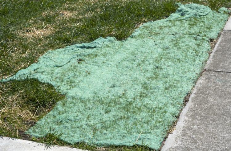 Lawn seed blanket