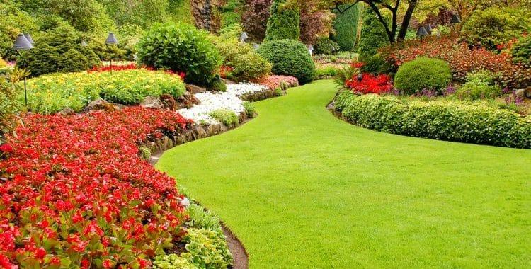 Do Lawns Produce Oxygen?