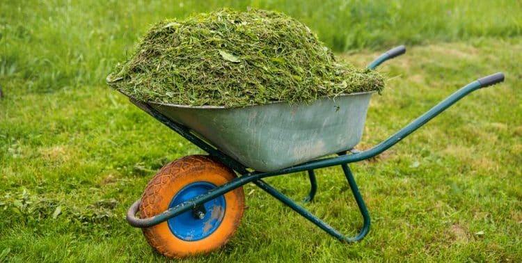 Do Lawn Clippings Make Good Mulch?