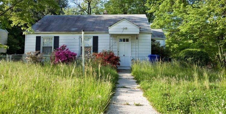 Do Lawns Reseed Themselves?