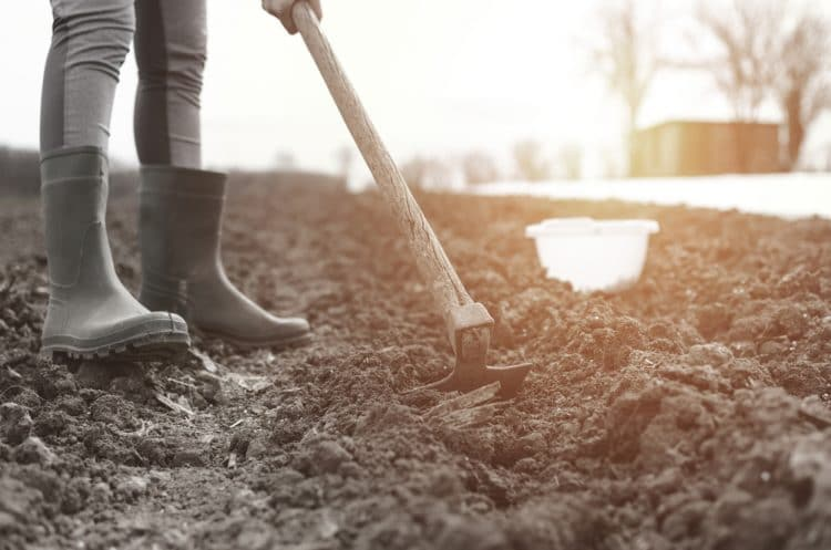 Tilling the yard by hand