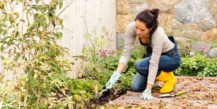 What Can You Plant in Late October?