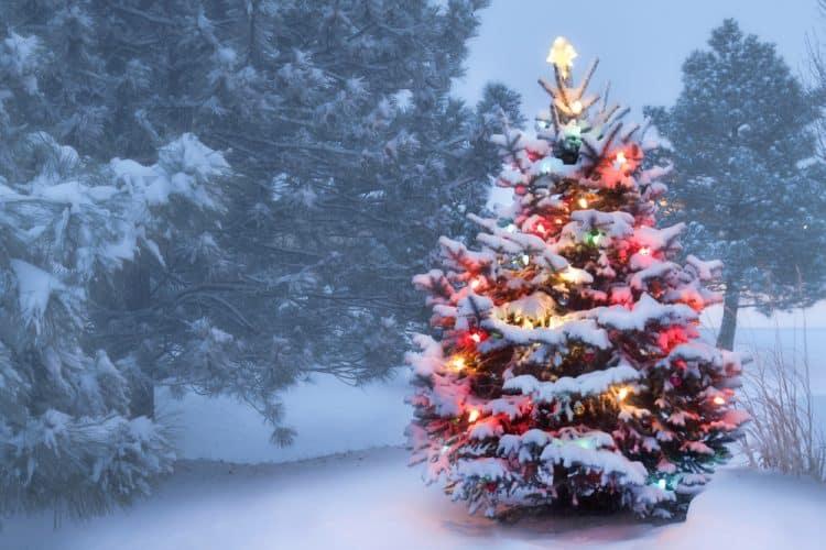 Artificial Christmas Tree Outside