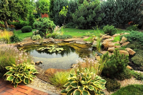 Do Backyard Ponds Attract Mosquitoes?