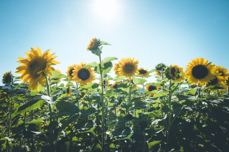 What Can You Plant in August?