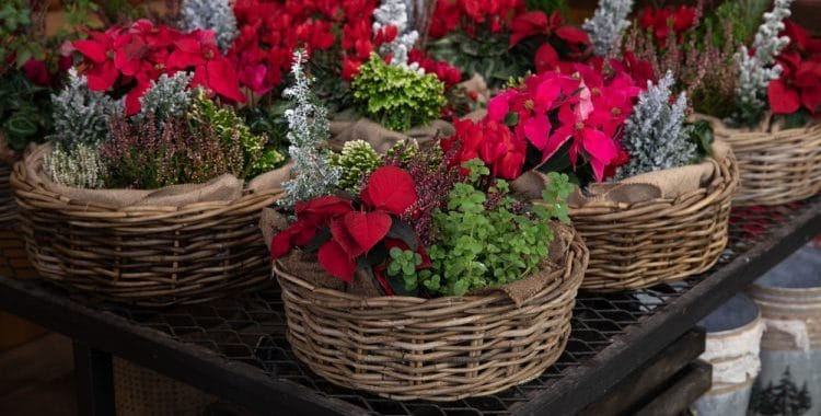 What Can You Plant in December?