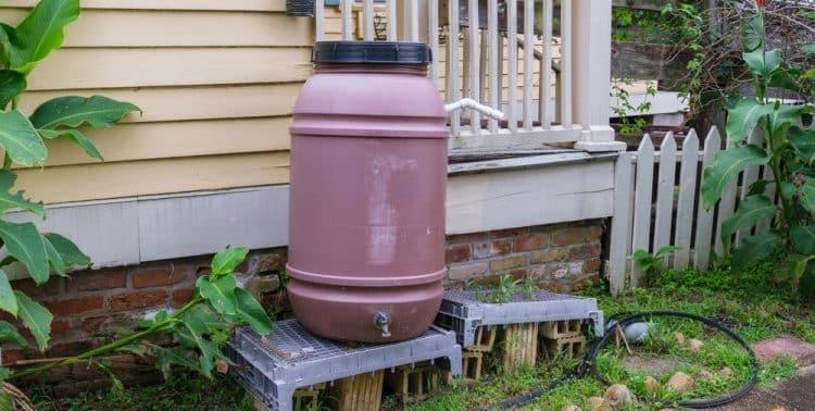 Do Rain Barrels Really Work?